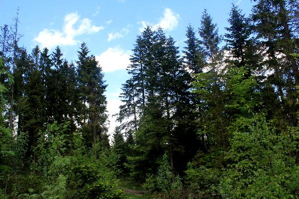 Urządzenia lasu na terenie powiatu